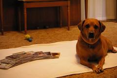 dog bailey