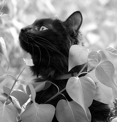 Become 1 with nature (*~Dharmainfrisco~*) Tags: bw cute cat outdoors kitten oneofakind kitty cisco greatest dharma outstanding peopleschoice thumpsup flickrpets flickrstars fotocats flickrsmileys mywinners bestofcats flickrhearts kittycrown worldpicture naturewatching heartsaward ultimategold indypirates naturewatcher wonderfulworldmix happyclicking flickrspets extrodinarycaptures catsobjects portraitsofloveones freenatiure hairtasticcatsdogs
