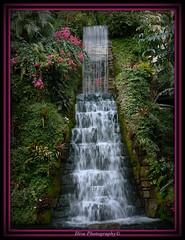 My Pride and Joy (Domesticated Diva) Tags: flowers plants stone notouchups waterfall rocks joy pride justme tropical breathtaking myprideandjoy blueribbonwinner notreatment beautyisintheeyeofthebeholder mywinners curtainofwater