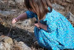 Close inspection (wesley jeanne) Tags: barrett bluedress nochildleftinside