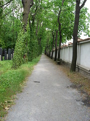 Neuer jüdischer Friedhof