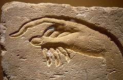Hand of Akhenaten making an offering to Aten (ggnyc) Tags: nyc newyorkcity hand egypt carving relief offering met aten akhenaten metropolitanmuseumofart ancientegypt egyptology egyptianart sanstone egyptianwing dynasty18 ashmunein handofakhenaten