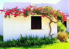 The closed window (Sandra_R) Tags: pink flowers light red summer plants white house tree green home portugal window colors leaves architecture outdoors photography flora afternoon exterior seasons bright details clarity nobody foliage simplicity algarve typical botany albufeira balaia flickrsbest mywinners abigfave balaiagolfvillage impressedbeauty favoritegarden flickrdiamond fiveflickrfavs
