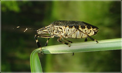 INSECTS (BASUDEB RAIGANJ) Tags: nature insect spectacular kingdom insects spec avtar hvhe1
