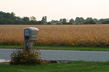 Mailbox and  Bean Field