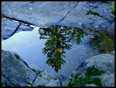Reflection (kornfox) Tags: reflection water pinetree river puddle rocks upsidedown
