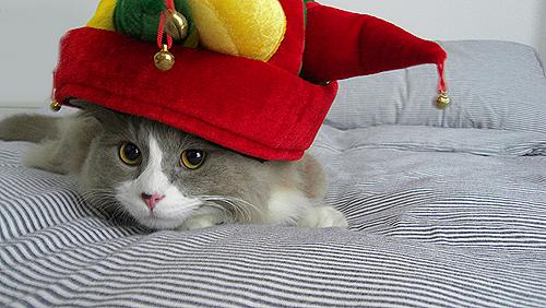 クリスマス猫