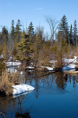 Orillia - March Thaw In Wetlands