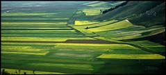 Geometria dei campi di lenticchie (enzo rettori) Tags: flowers italy mountains spring pentax parks vegetable bloom fields flowering fiori perugia umbria lentils monti norcia castelluccio campi appennini apennines fioritura lenticchie legumi castellucciodinorcia parconazionaledeimontisibillini sibillininationalpark bellitalia justpentax pentaxiani pentaxart enzorettori rettorienzo