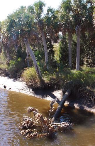 Florida_22