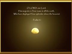 41: Daily Inspirational Bible Verse