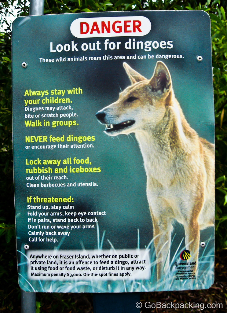 Dingo warning sign, Fraser Island, Australia