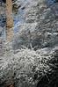 (Tamayura) Tags: winter snow japan nikon kyoto 京都 日本 d200 kansai kurama