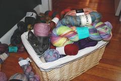 Cat v. yarn