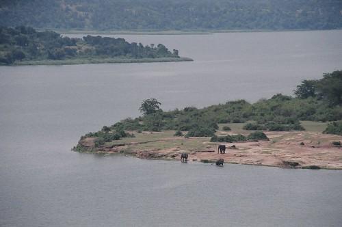 Uganda - QENP Elephants Remote 4