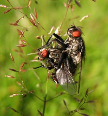 Pair of flies (feel free to suggest a more apt title!)