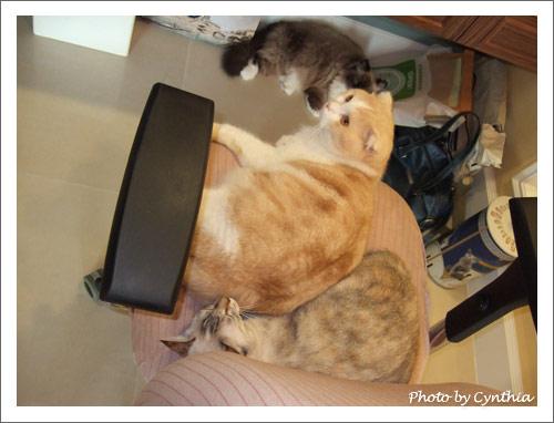 Biru和Sora擠在一張椅子上