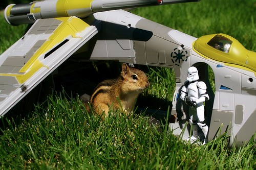 ardilla y nave de Star Wars
