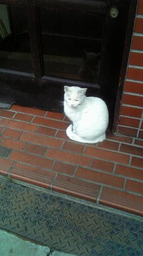 今日は喫茶店の猫