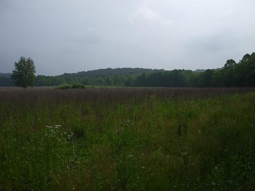 Field by Nebo Ridge trailhead