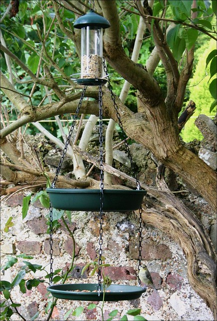 Bird table in use.