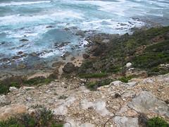 IMG_2977 (kenorrha) Tags: australia greatoceanwalk scenicsnotjustlandscapes