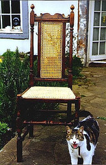 Antique chair with caned panel on back plus cat