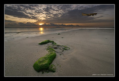 Early Morning Flight (DanielKHC) Tags: sea green beach digital plane sunrise landscape dawn moss high sand bravo singapore rocks dynamic sony landing alpha changi range dri increase hdr a100 blending singaporeairlines dynamicrangeincrease supershot magicdonkey 4exp tamron1118mm abigfave anawesomeshot superaplus aplusphoto danielcheong superbmasterpiece infinestyle goldenphotographer danielkhc notonemapped theperfectphotographer