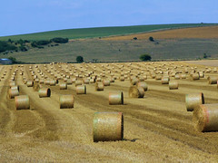 Bales of hay (P.J.W) Tags: tractor nature field rural landscape corn view farm farming straw views cutting rolls hay agriculture bales wiltshire haymaking harvesting baling pjw