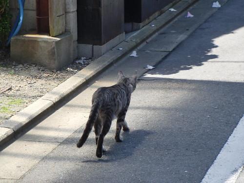 Today's Cat@2010-05-15