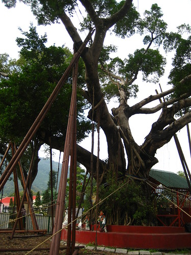 Lam Tsuen Wishing Tree