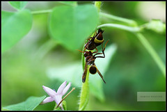 Made for each other!... (ramesh.rasaiyan) Tags: green love garden insect affection kerala chennai cochin madeforeachother insectlove edapally canon100mmf28lisusm rameshrasaiyan canonesorebelt1i chennaiphotographers