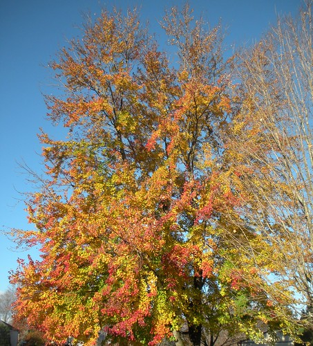 fall colors (1)