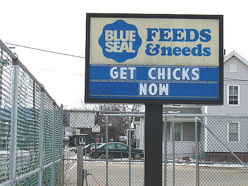 Get Chicks Now