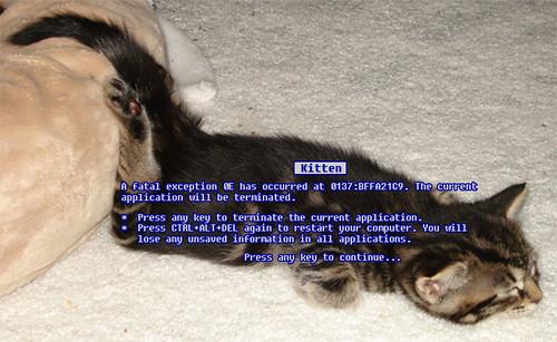 BSOD Kitten (Large)