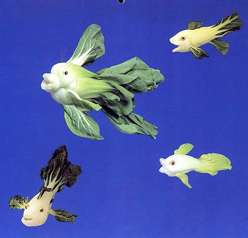 Cabbage goldfish