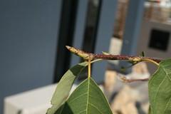 芽が出てるジューンベリー