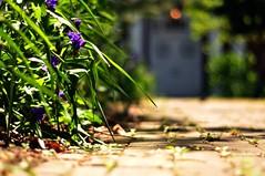 (julianne's) Tags: door flowers 50mm nikon dof maryland stjohns annapolis