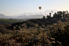 Hot air balloons over Temecula vineyards - Temecula California (Lucie Maru) Tags: california usa mountains hot fog sunrise balloons landscape air hills vineyards valley hotairballoons temecula