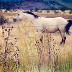 323/365: Happy Fence Friday: {Santa Fe Ranch} Edition!