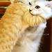 ネコ:Hug me