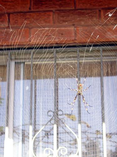 Spider Web_02