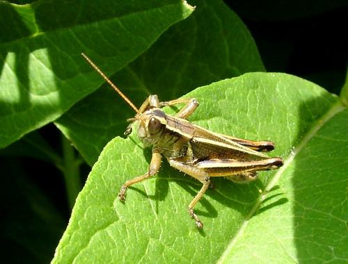 Surga serangga