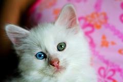 Our newest edition :) (Little.Miss.Sunshine) Tags: bestofcats empryeananimals boc0807