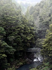 Whangarei, Northland, New Zealand (Sandy Austin) Tags: newzealand waterfall northisland northland whangarei whangareitownbasin panasoniclumixdmcfz5 sandyaustin