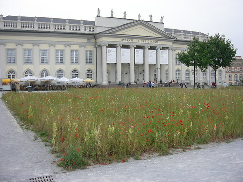 Ivecovic's 'Poppy Field' on Friedrichsplatz 002