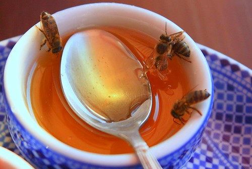 bees drinking honey from a small bowl