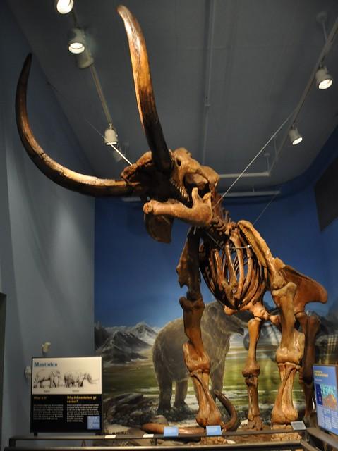Burke museum, University of Washington