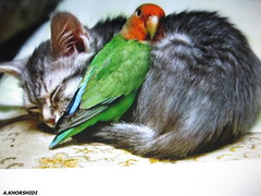 FRIEND (khoory123) Tags: cat friend parrot and beast