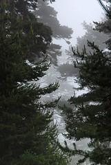 (supersky77) Tags: alps nature pine natura alpen pino alpi valdaosta pinussylvestris scotchpine montavic unature pinosilvestre mawep